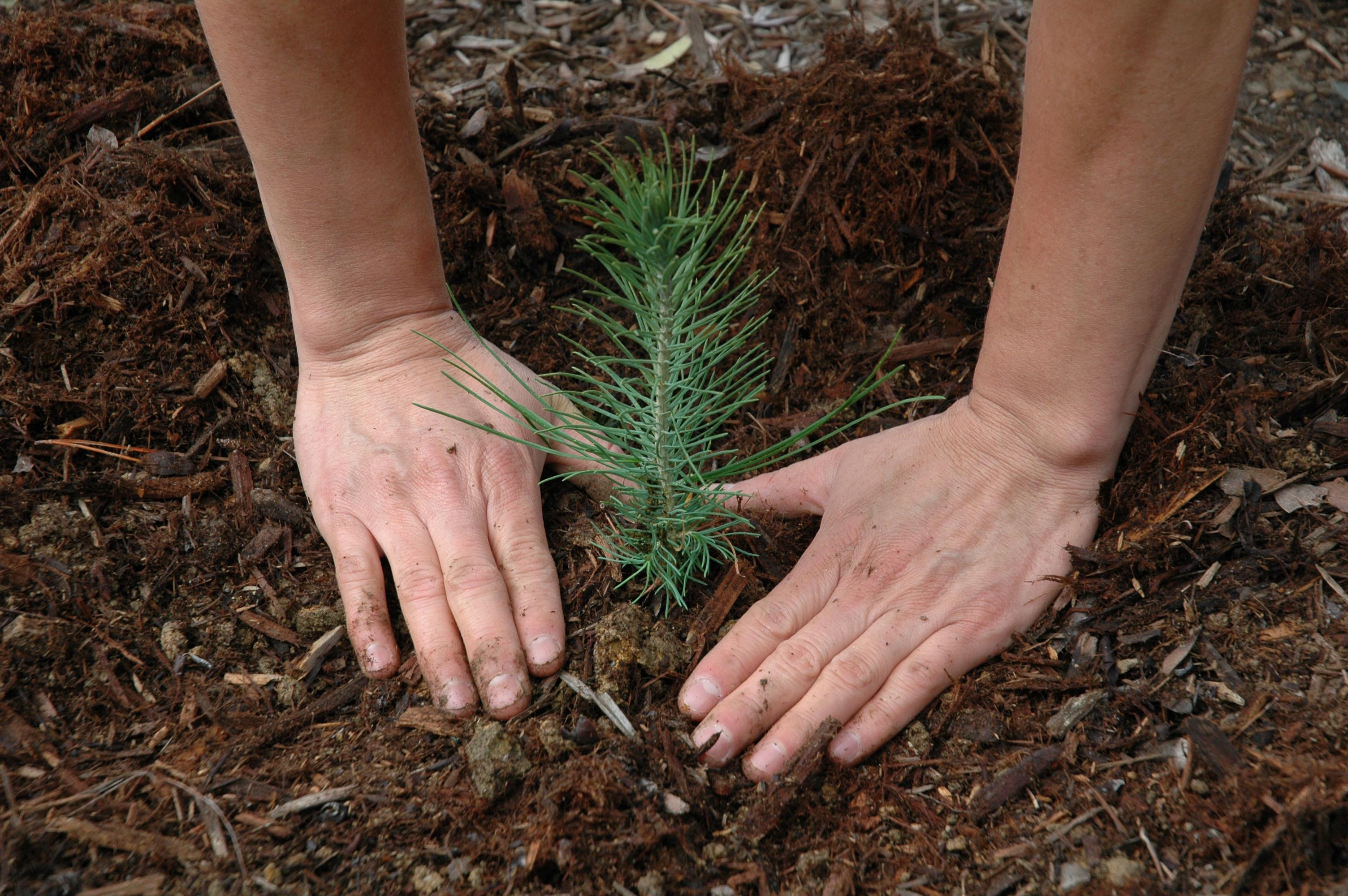 Arbor Works Tree Planting