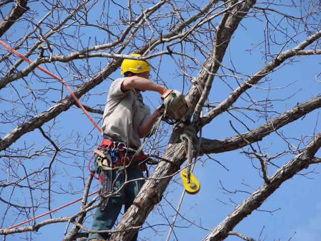 Services Tree Trimming